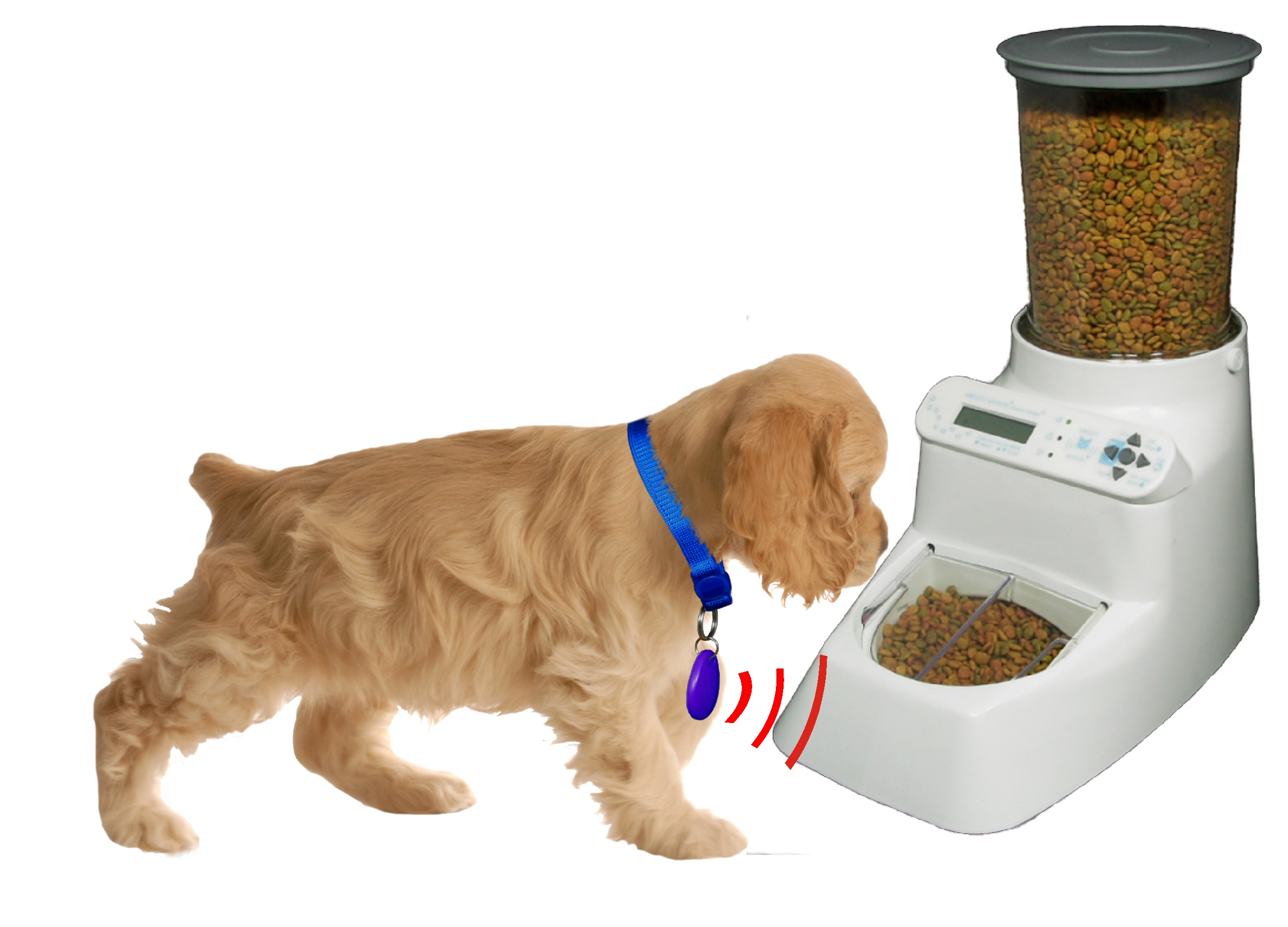 recorder feeder dog buy voice andrew and feeders day pets james with automatic image timer pet